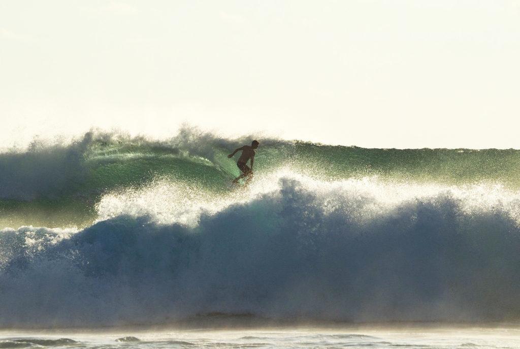seed resort - surf